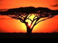 africa at dawn
