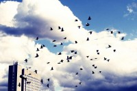 A Quick Guide to Migrating to VoIP