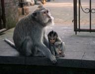 Monkey See, Monkey Do, Monkey Break to Test Your Cloud Infrastructure